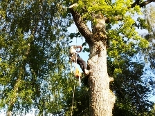 Работы с высокими деревьями