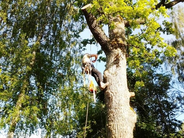 альпинисты обрезка деревьев